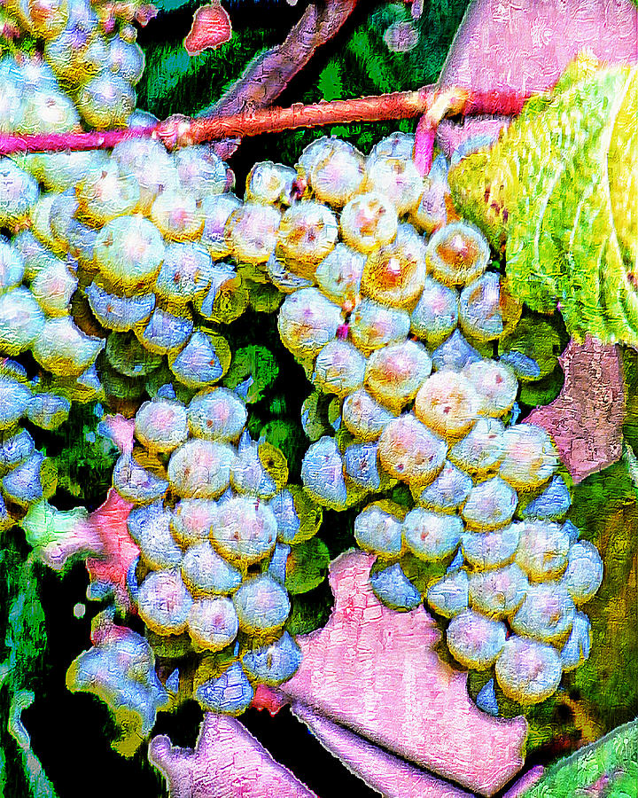 Wine Grapes Digital Art - Smell The Vintage I by Ken Evans
