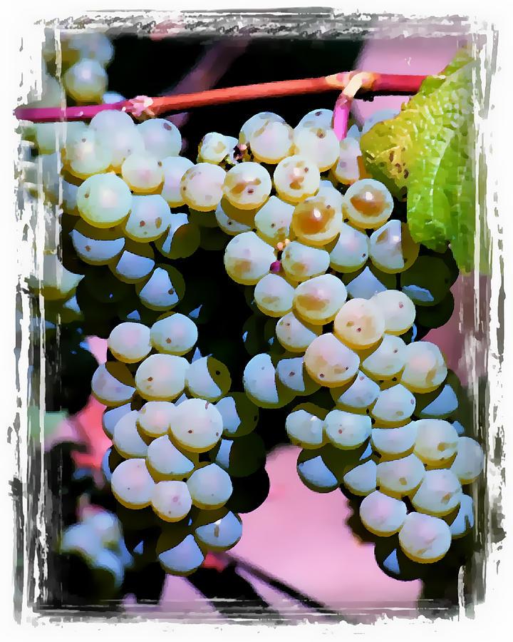 Wine Grapes Digital Art - Smell The Vintage II by Ken Evans