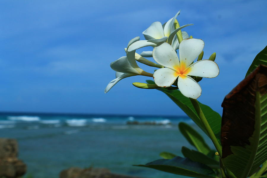 Plumeria Photograph - Smells Good by Catie Canetti