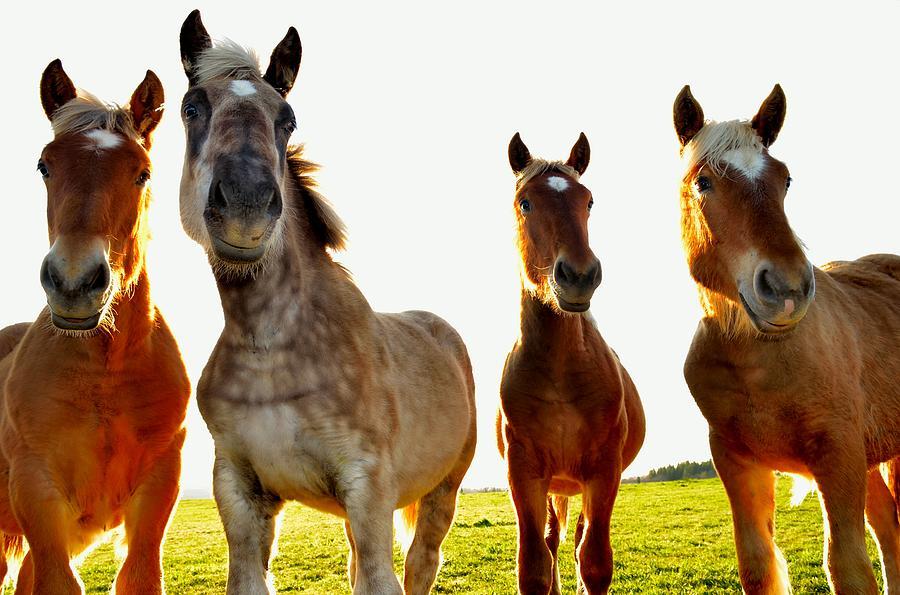 Smile Photograph - Smiles Horses by Patrick Pestre