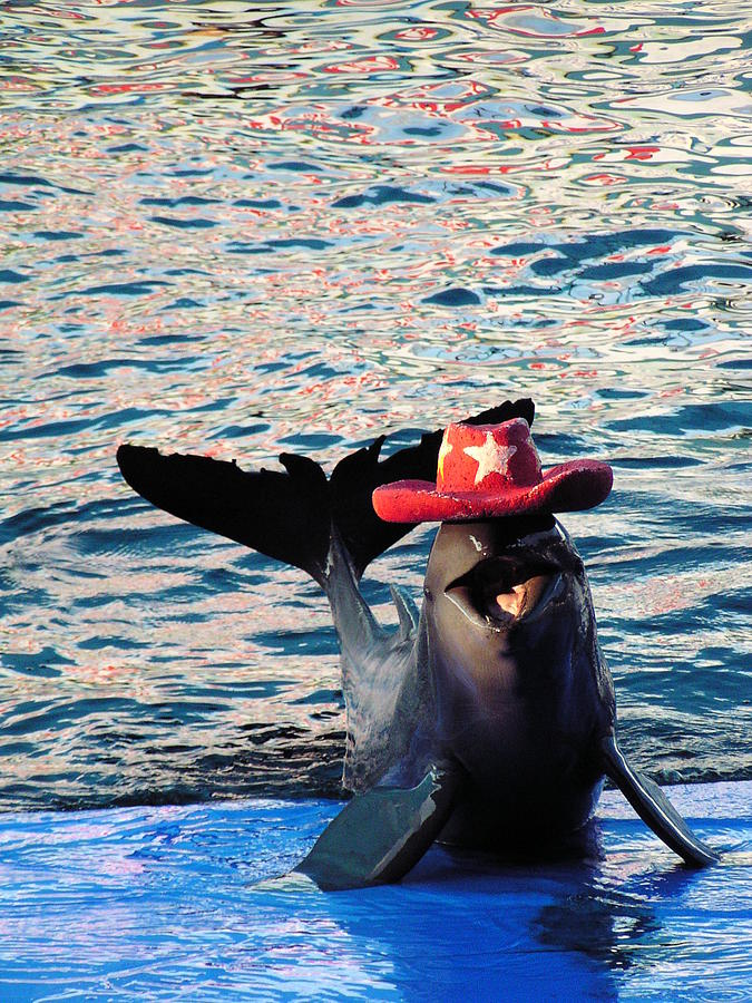 Dolphin Photograph - Smiley Dolphin by Sarode Nimmanwattana