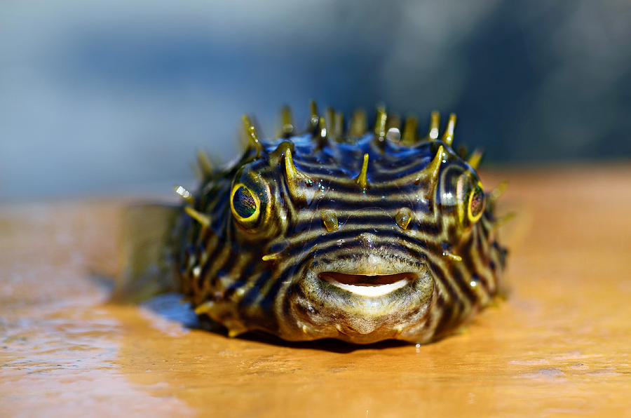 Tropical Fish Photograph - Smiley by Laura Fasulo