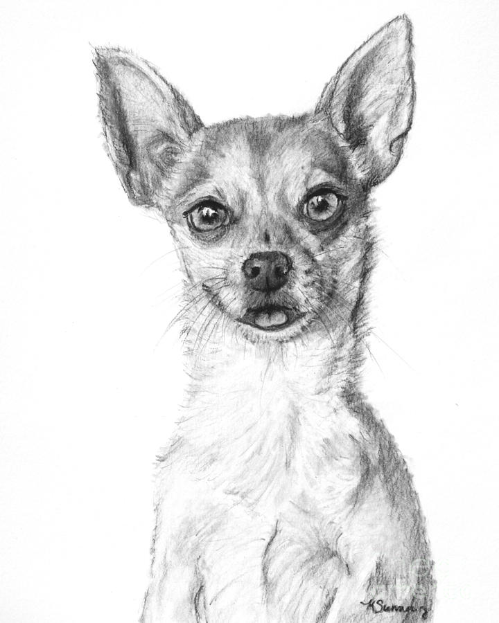Chihuahua Drawing - Smiling Chihuahua In Charcoal by Kate Sumners