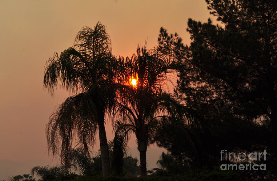 Smoke Covered Sky Sunset Thru The Palm Trees Photograph By