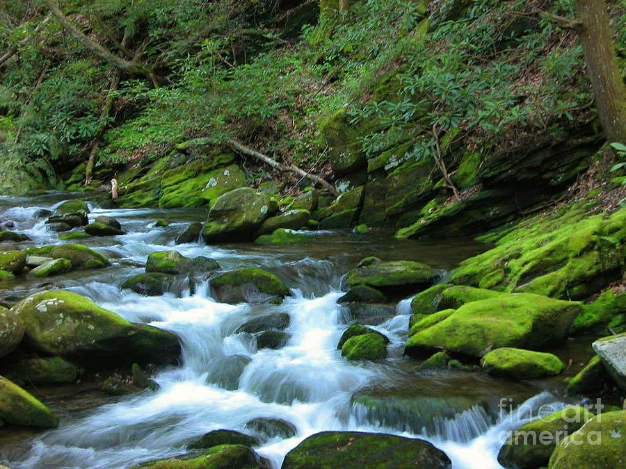Smokey Mountain Spring Photograph by Don F  Bradford