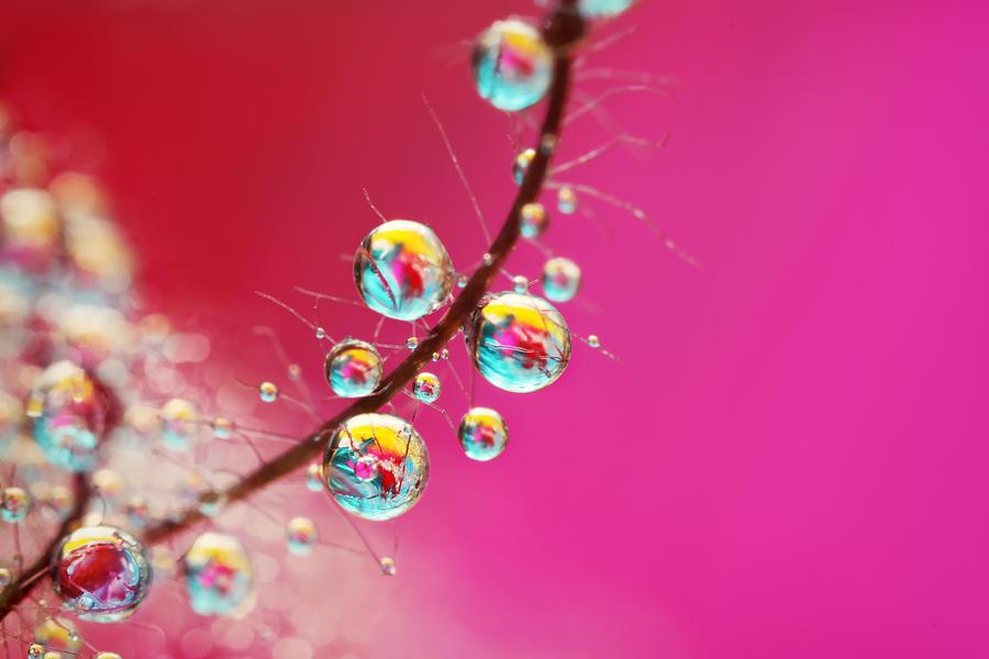 Water Photograph - Smoking Pink Drops by Sharon Johnstone