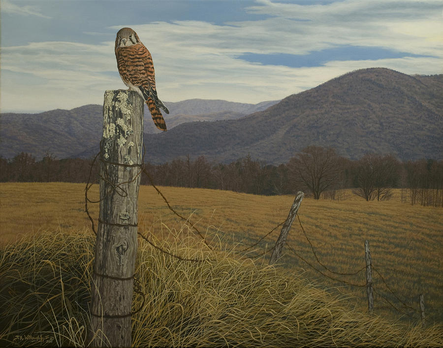 American Kestrel Painting - Smoky Mountain Hunter-american Kestrel by James Willoughby III