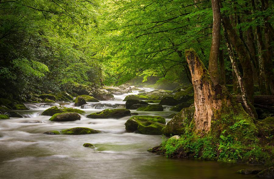 Smoky Mountains Solitude - Great Smoky Mountains National Park Photograph