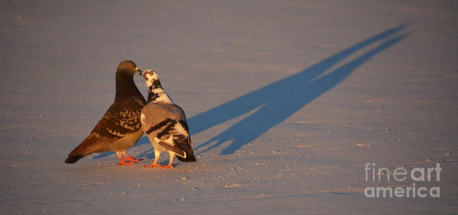 Smooching Photograph - Smooching Love Birds by Henry Kowalski