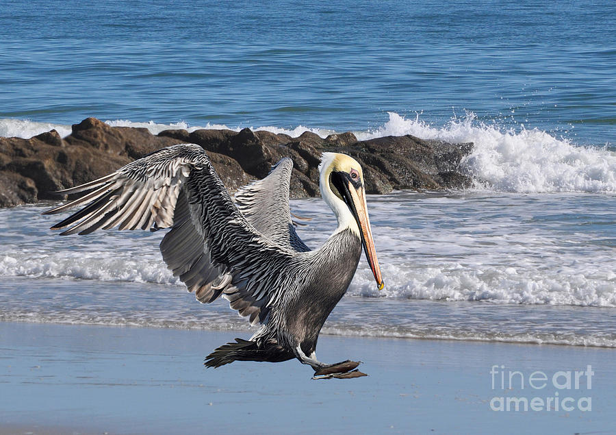 Birds Photograph - Smooth Landing by Kathy Baccari