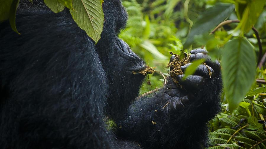 Rwanda Photograph - Snacktime by Paul Weaver