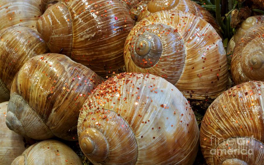 Snail House Photograph - Snail Houses by Jolanta Meskauskiene