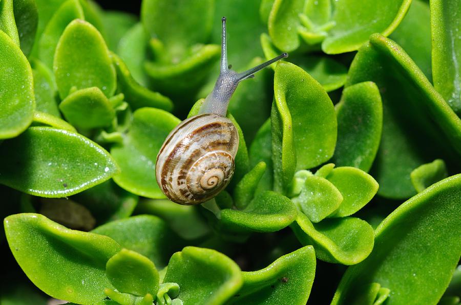 Snail Photograph - Snail by Ivelin Donchev