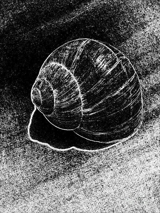 Snail Shells Digital Art - Snail Shell Black And White Art No.11 by Drinka Mercep