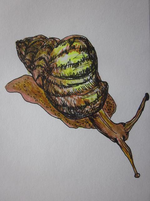 Slug Drawing - Snail Sketch by Cherie Sexsmith