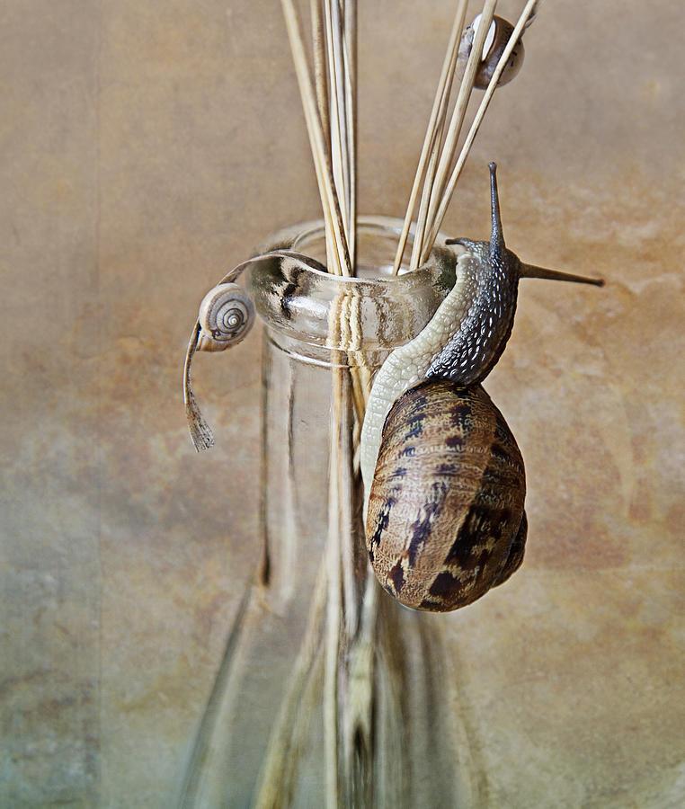 Snails Photograph