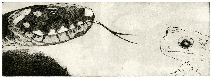 Snake And Salamander - When There Is No Way Forward  - Prey System - Food Chain - Etching Series Painting