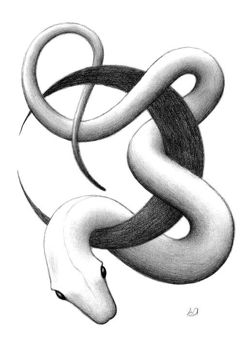 Snake Drawing - Snake by Erla Alberts