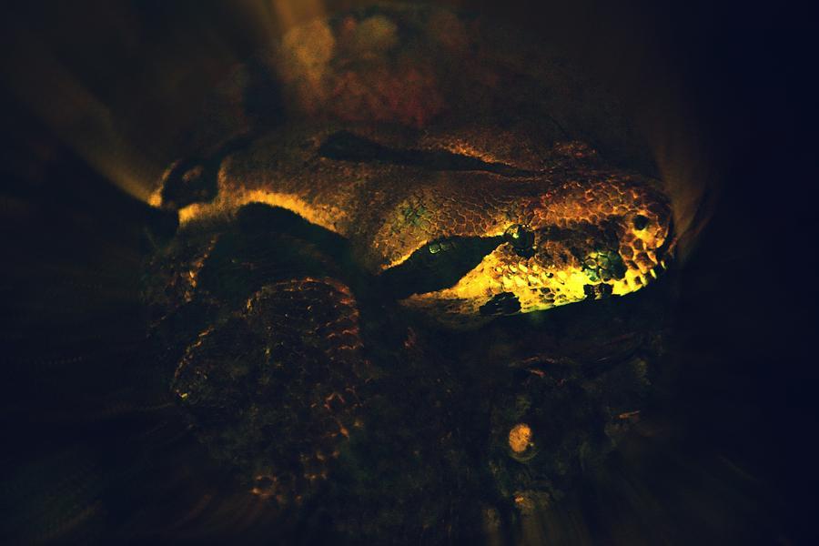 Snake Photograph - Snake by Valarie Davis