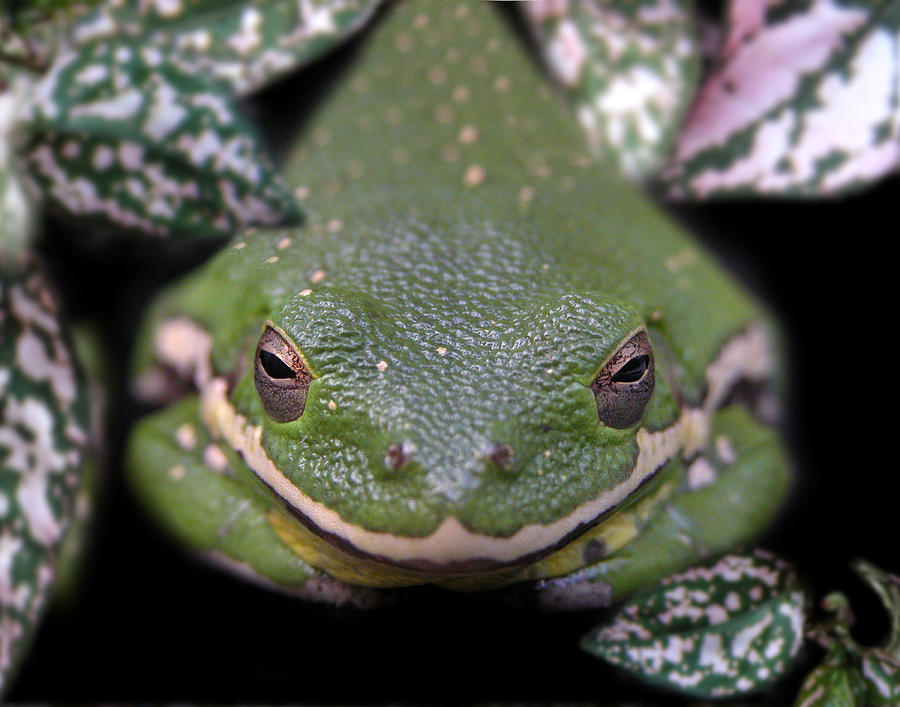 Snake Photograph - Snakefrog by Joseph Tese