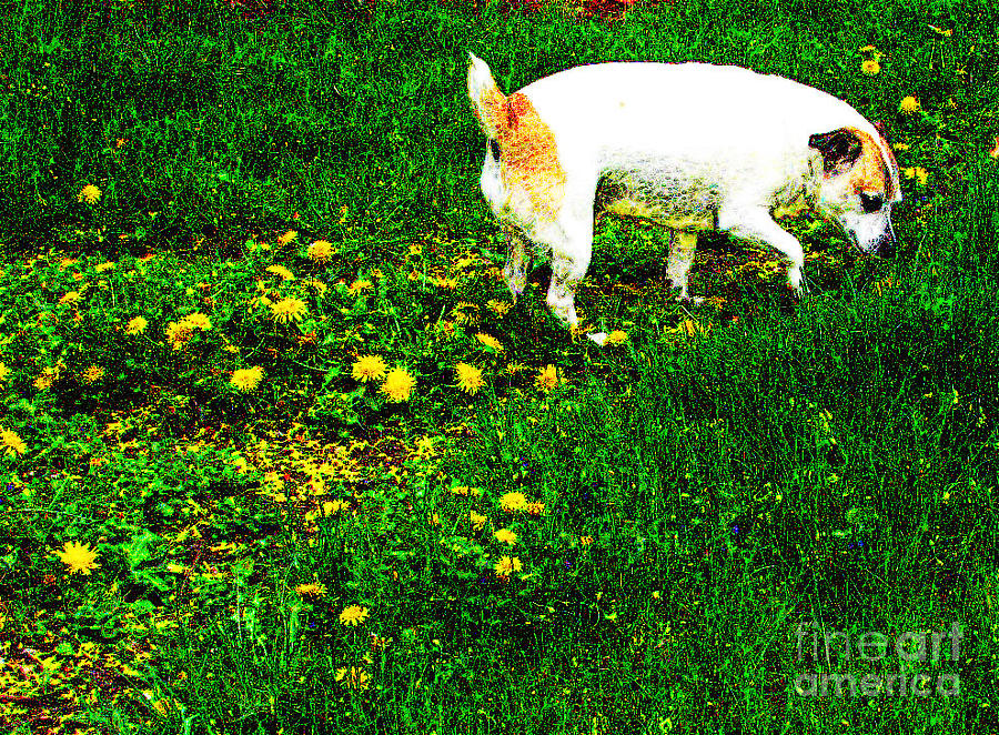 Dog Photograph - Sniffin The Dandelions by Minding My  Visions by Adri and Ray
