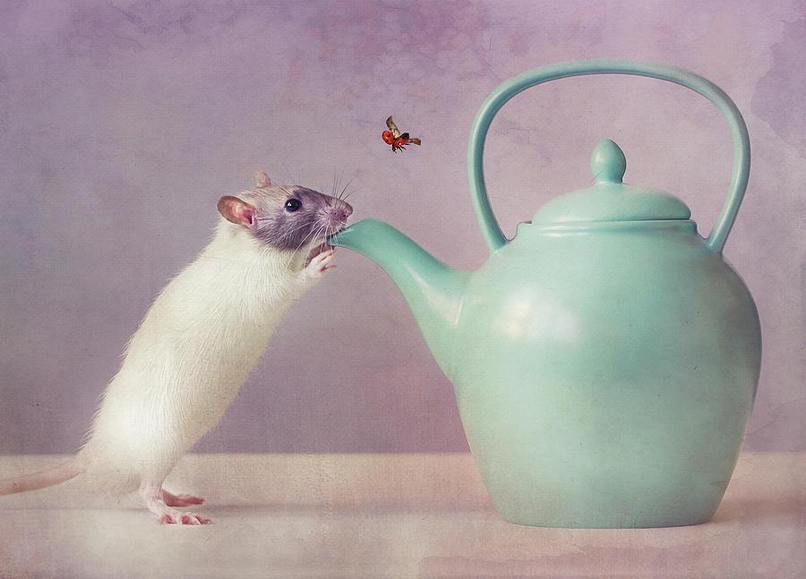 Rat Photograph - Snoozy  :) by Ellen Van Deelen