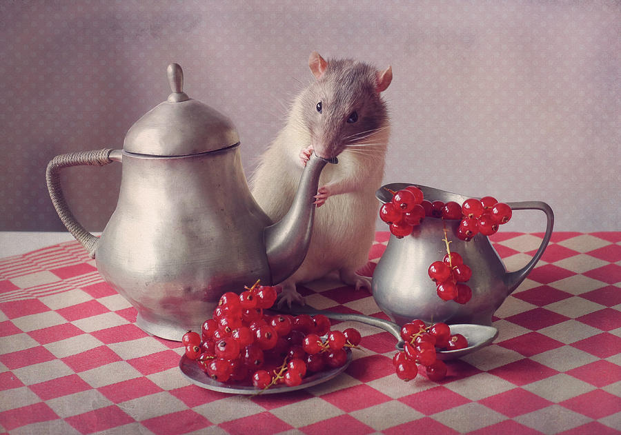 Rodent Photograph - Snoozy  (again) by Ellen Van Deelen