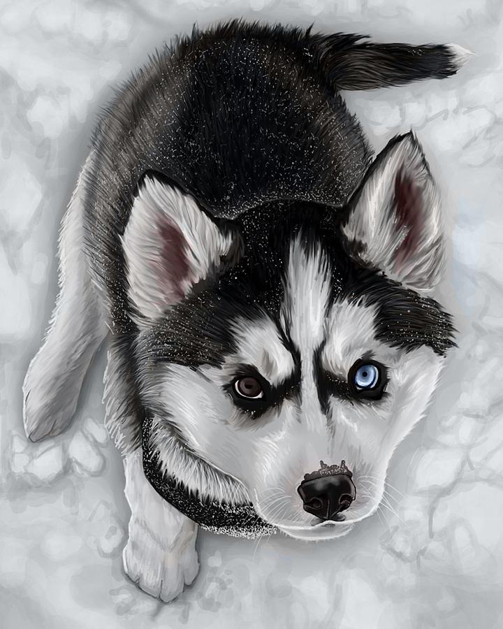 Dog Digital Art - Snow Angel by Tiffani Barner