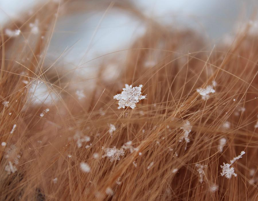 Nature Photograph - Snow Beauty by Candice Trimble