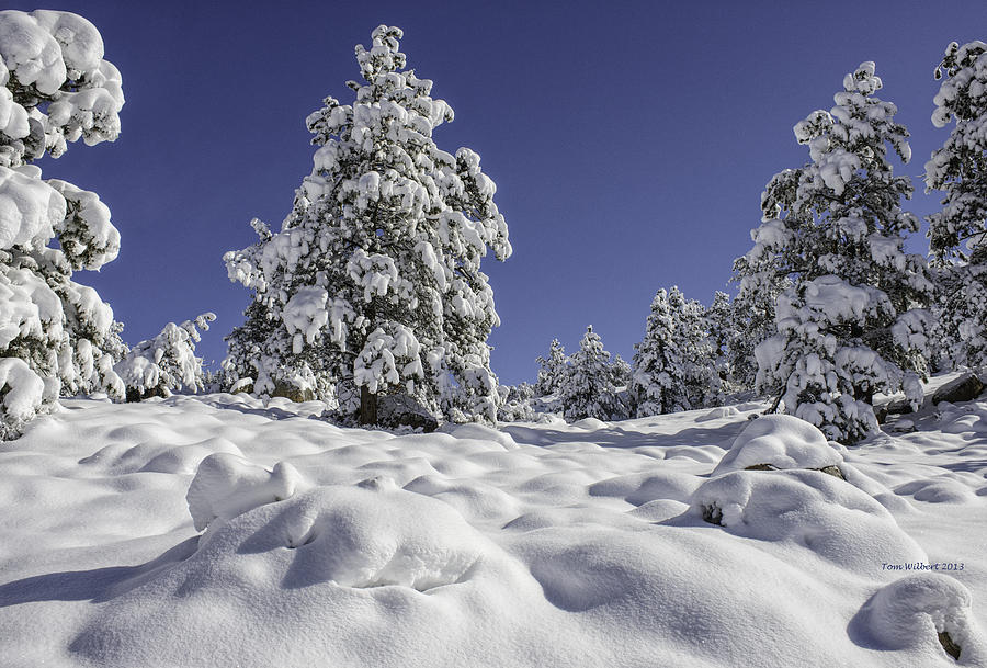 Snow Photograph - Snow Bomb by Tom Wilbert