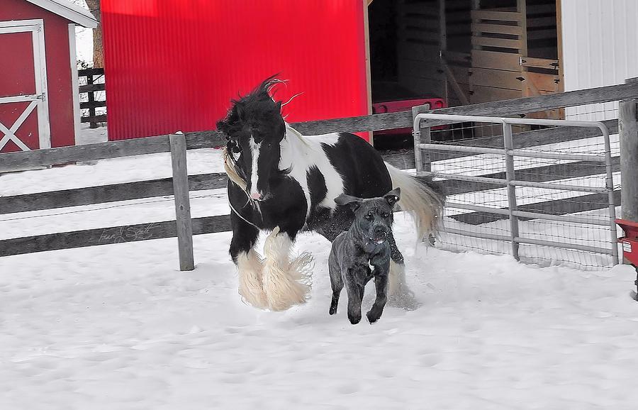 Gypsy Horse Photograph - Snow Buddies by Fran J Scott