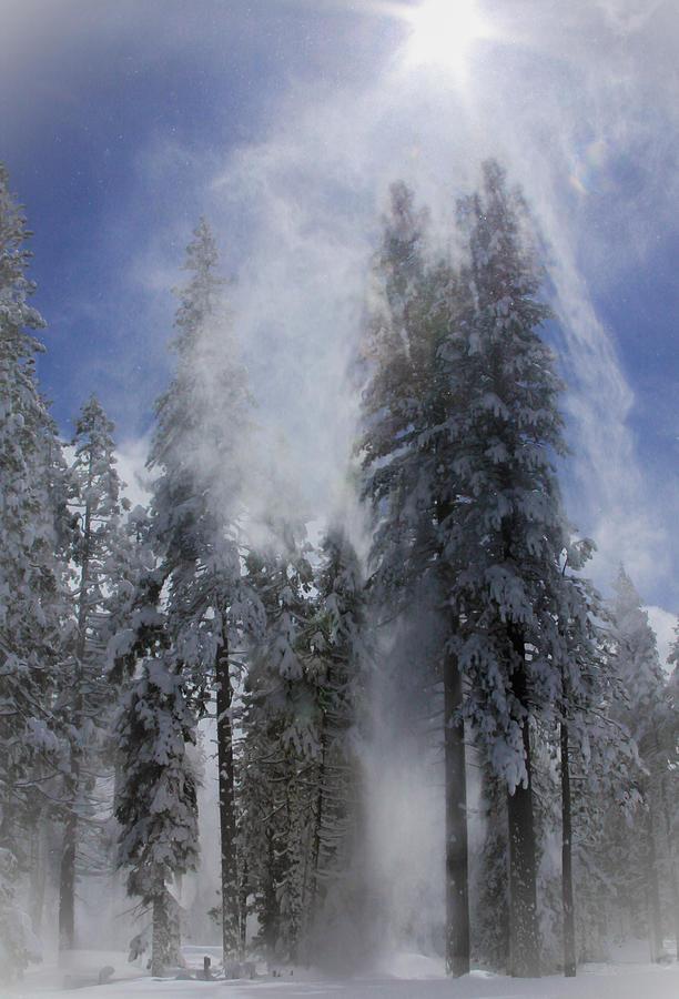 Snow Burst II by Mark Robert Bein
