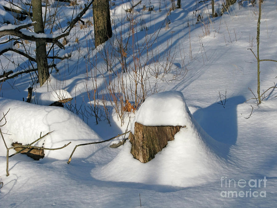 Winter Photograph - Snow-capped by Ann Horn