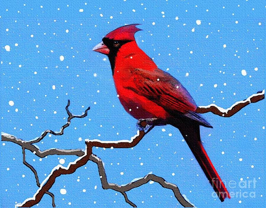 Animal Digital Art - Snow Card by Robert Foster