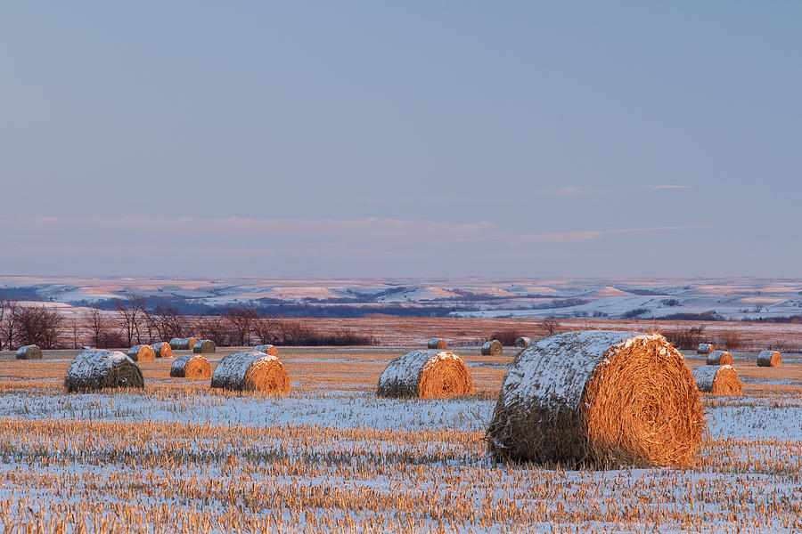 Blue Sky Photograph - Snow Covered Bales by Scott Bean