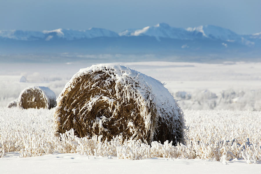 Snow Covered Hay Bale In A Snow Covered Photograph by Michael Interisano / Design Pics