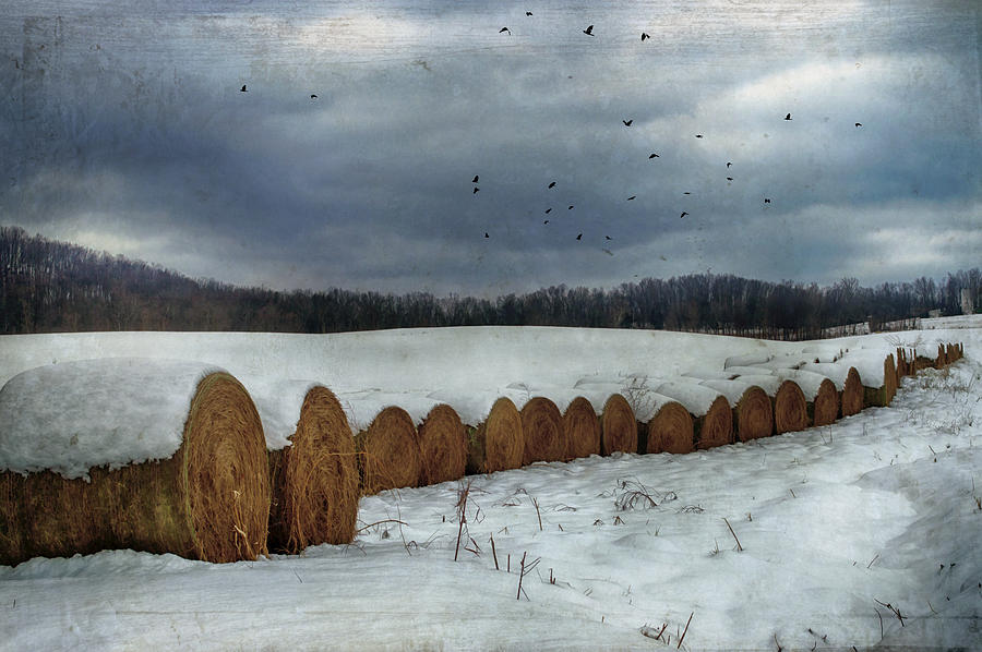 Hay Photograph - Snow Covered Hay Bales by Kathy Jennings