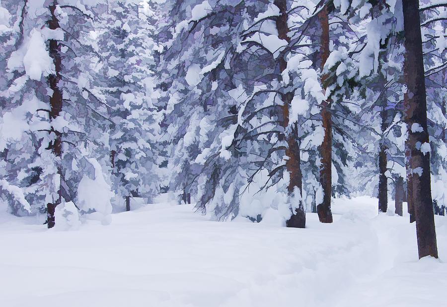 Beauty Photograph - Snow-dappled Woods by Don Schwartz
