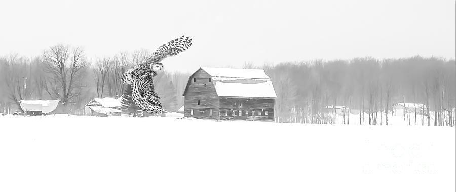 Snow Day - Snowy Owl Photograph