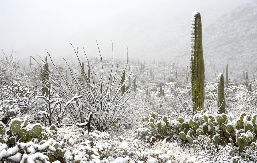 Arizona Photograph - Snow Day In The Desert  by Saija  Lehtonen