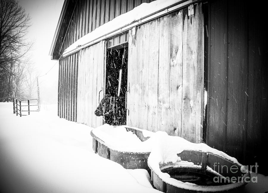 Snow Day Photograph - Snow Day by Sue OConnor
