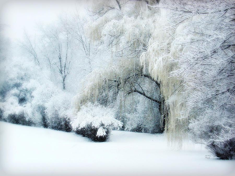 Snow Dream Photograph - Snow Dream by Julie Palencia