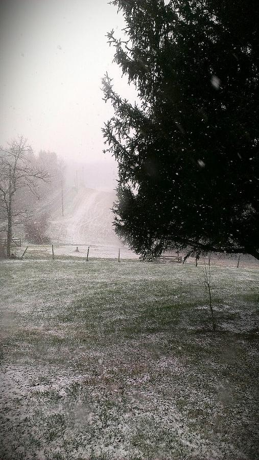 Snow Photograph - Snow Falling by Nickaleen Neff