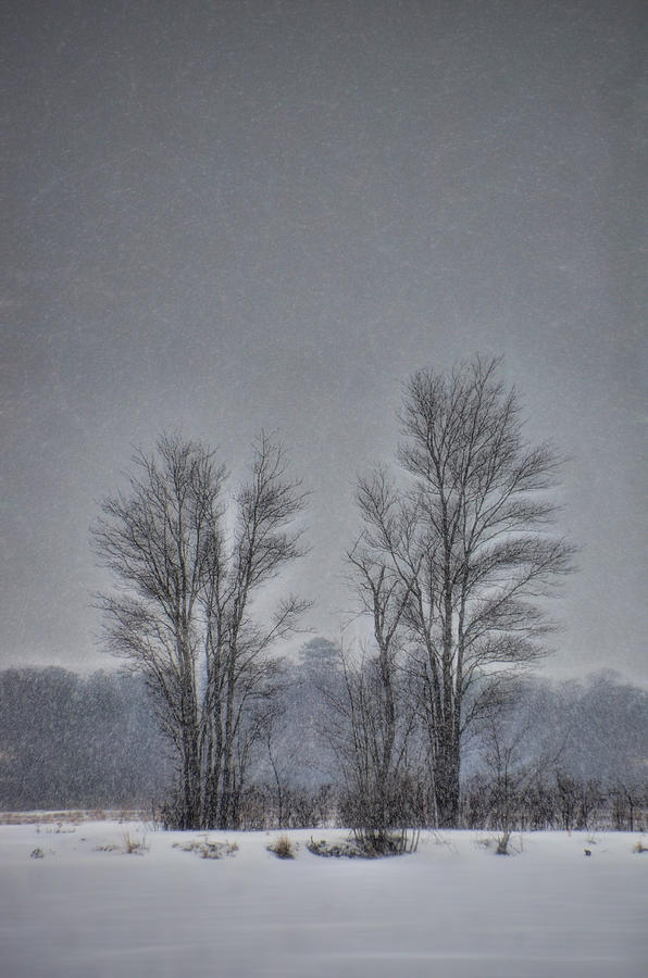 Snow Fall Photograph - Snow Falling On Bare Trees by Beth Sawickie