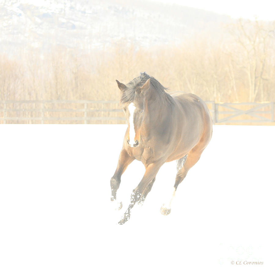 Snow Fun by Carol Lynn Coronios