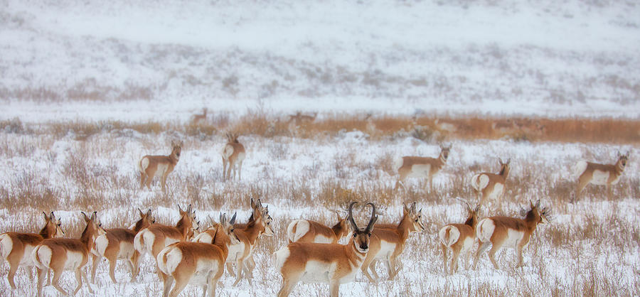 Ice Photograph - Snow Grazers by Darren  White