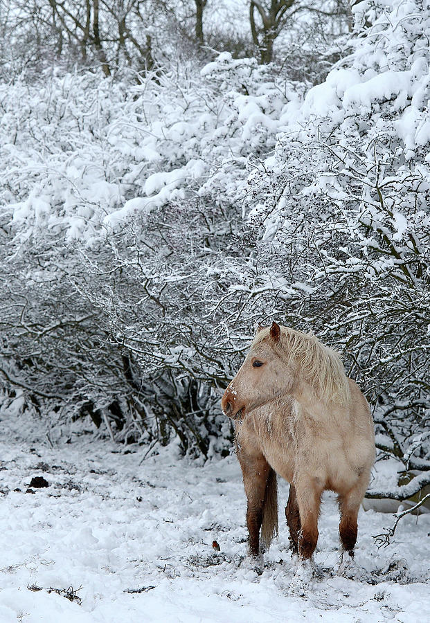 Snow Hits Parts Of The Uk Photograph By Charles Mcquillan