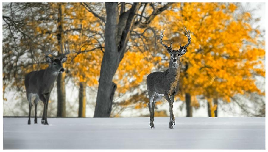 Animals Photograph - Snow In Autumn  by Garett Gabriel