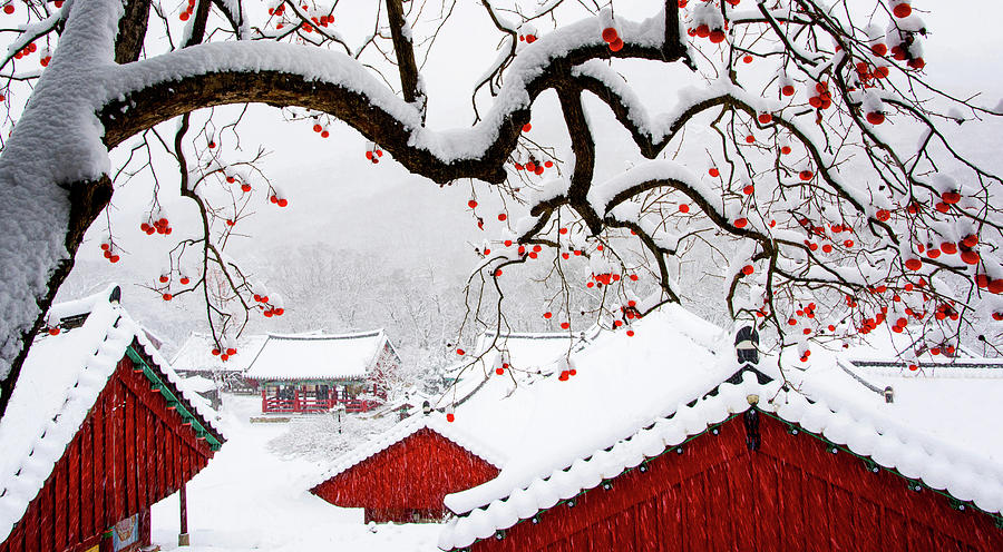 Temple Photograph - Snow In Temple by Bongok Namkoong