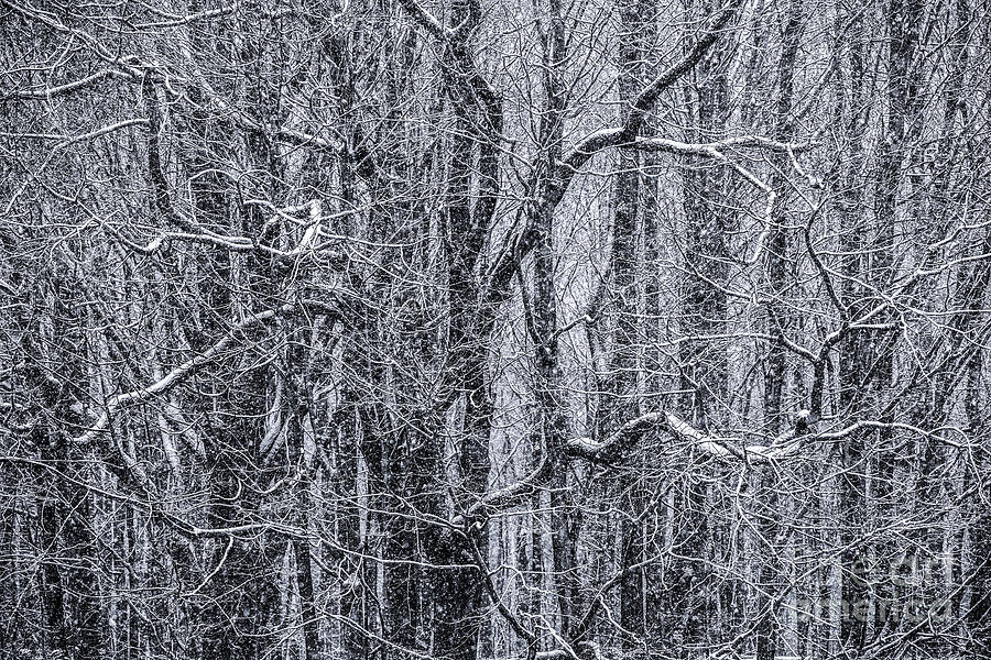 Snow Photograph - Snow In The Forest by Diane Diederich